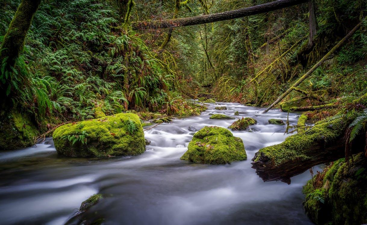 Méfiance - Ruisseau et pierres