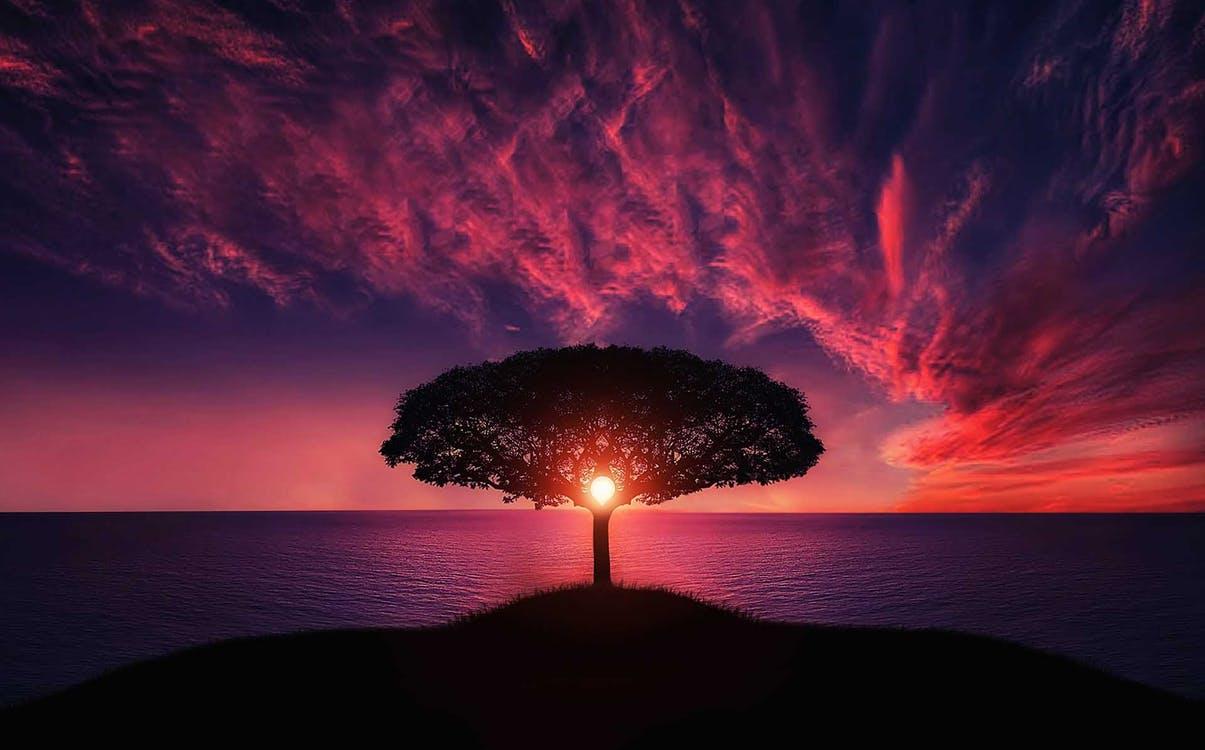 La poésie - Théo Bamara - Pensées